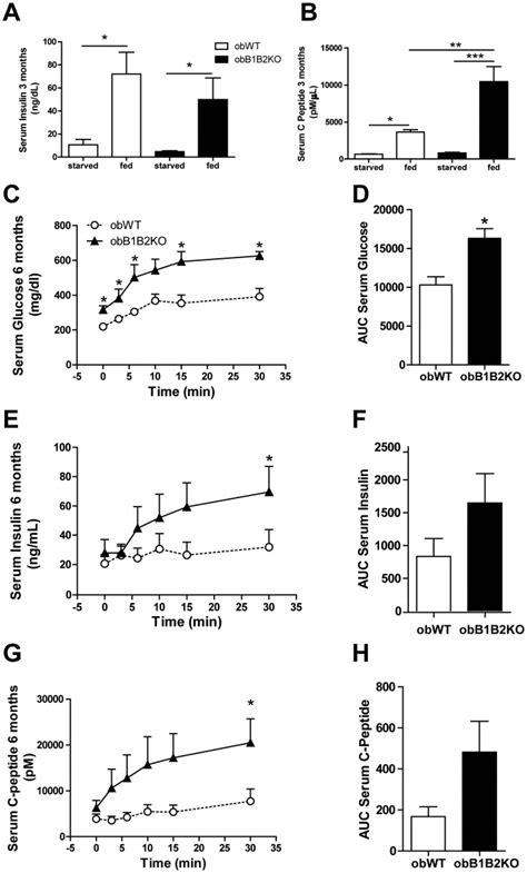 Serum Glucola three month obb1b2ko mice 2 fold more c peptide levels