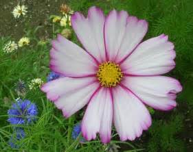 mami made it october birth flower blume des 25 best october birth flowers ideas on