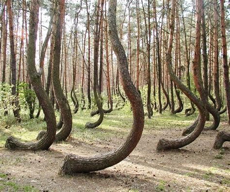 crooked forest poland 10 beautiful places on earth that are real