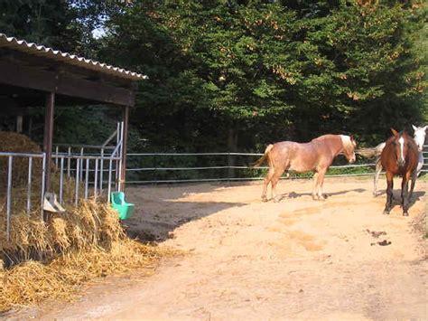 weidenh tte laufstall gro 223 pferde