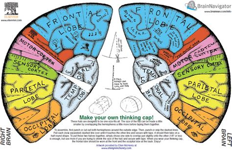 Brain Hat Template by Best Photos Of Brain Cap Template Brain Thinking Cap