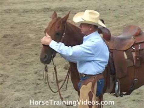how to bridle a horse and adjust the bit correctly