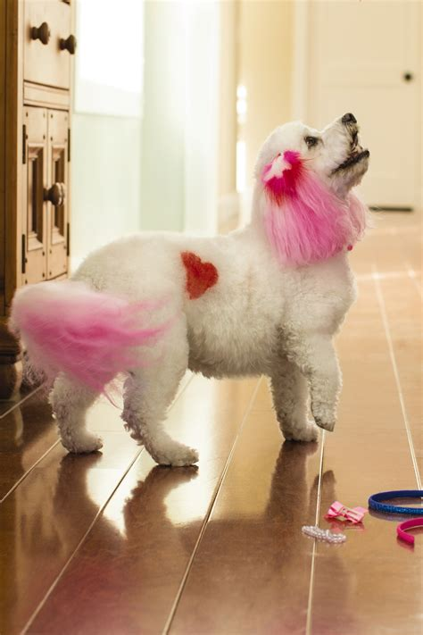 petsmart puppy grooming petsmart introduces creative grooming options to express your s personality