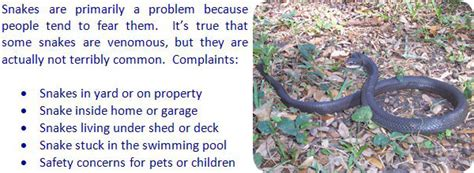 how to get rid of snakes in the house or yard