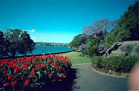 the botanical gardens sydney royal botanic gardens sydney