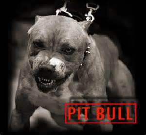 cool pit pitbull cool graphic