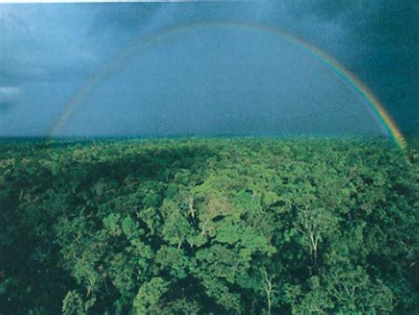 pisos la selva del c amazonas el departamento de amazonas