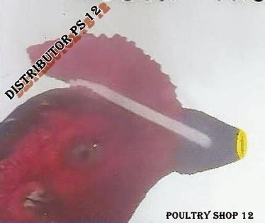 Obat Tradisional Agar Stamina Ayam Aduan Lebih Kuat Dan Bagus distributor sepatu ayam terbaru masker ayam ring pemberat