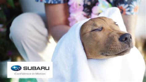 suburu hair salon dog dogs visit a spa for the first time presented by