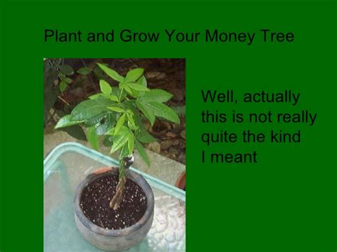 a to a dollar growing the family business coins add up books home business plant and grow your money tree