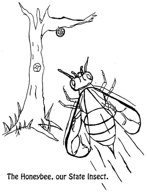 coloring page of louisiana state tree alabama state tree coloring page az coloring pages