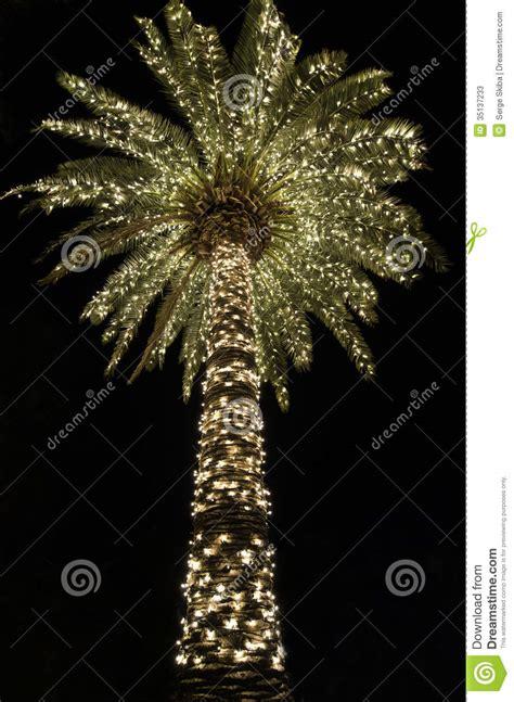 charleston south carolina christmas lights palmetto christmas stock image image of season palm
