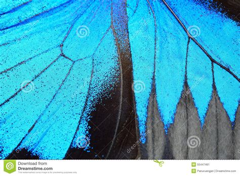 blue nature pattern blue butterfly wing stock photo image 55447461