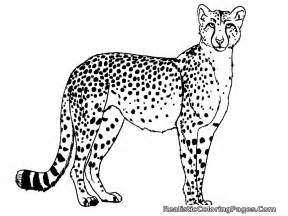cheetah coloring pages free coloring pages of cheetah realistic coloring pages