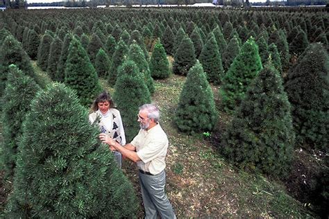 christmas tree farms in southeast michigan tree pests and weeds