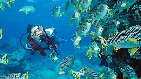 dive trips scuba diving trips