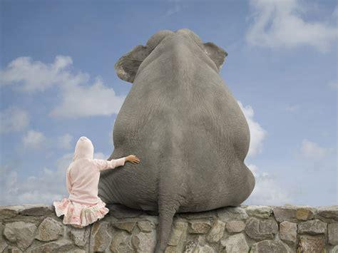 imagenes back up galer 237 a de im 225 genes fondos de pantalla de elefantes