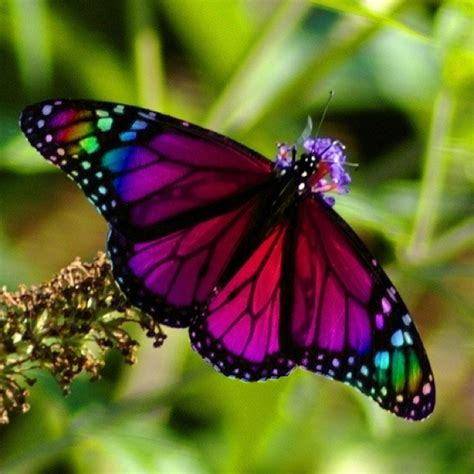 colorful moths discover and save creative ideas