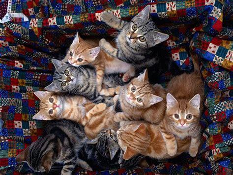 wallpaper of cat family cat cute cute cat family