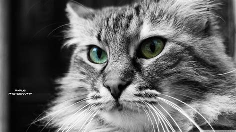 wallpaper abyss cat 1060 cat hd wallpapers backgrounds wallpaper abyss