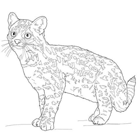 coloring pages of wild cats wild cat coloring pages timeless miraclecom jaguar