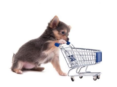 new puppy supplies puppy supplies must haves for your new puppy or