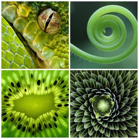 imagenes ocultas en la naturaleza geometr 237 a en la naturaleza bayer innovaci 243 n