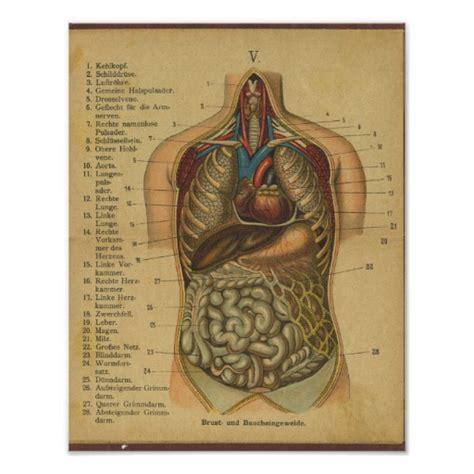 anatomie innere organe vinatge deutsche anatomie druck innere organe poster zazzle