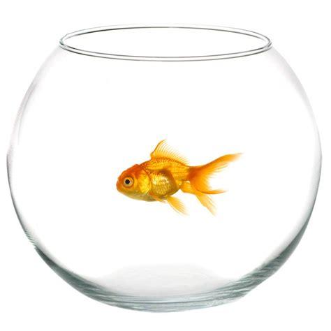 vasca pesce rosso boccia bolla olla per pesci pesce rosso contenitore in