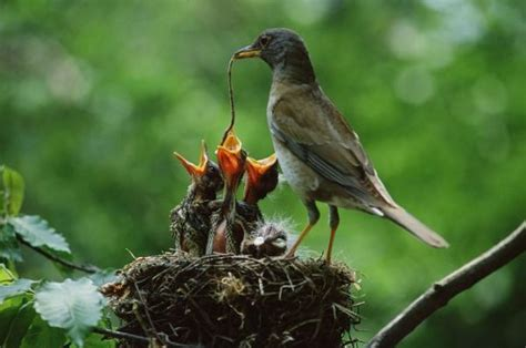 15 amazing images of baby birds at dinner time