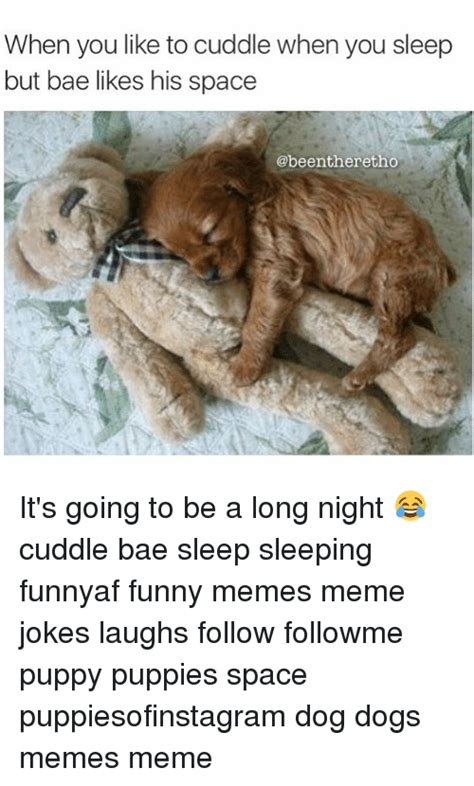 why do dogs like to cuddle jokes memes of 2016 on sizzle birthday