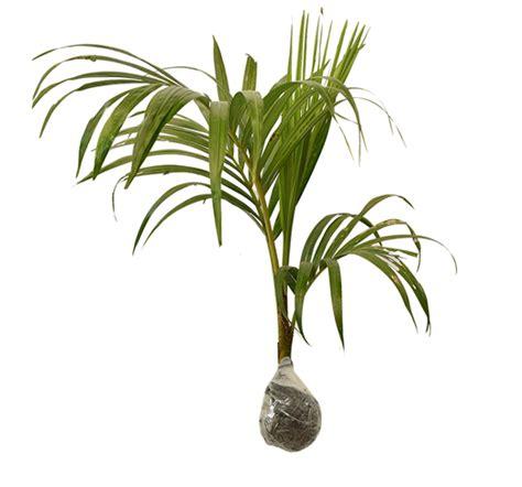 tanaman hias  perlu kita punya oleh kita halaman