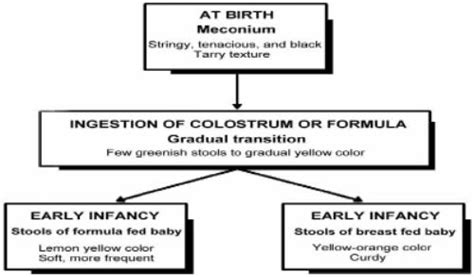 characteristics of the typical newborn infant
