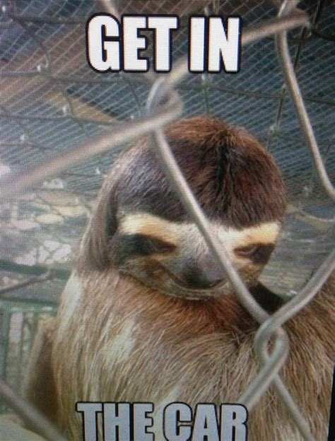 images  creepy sloth  pinterest  van