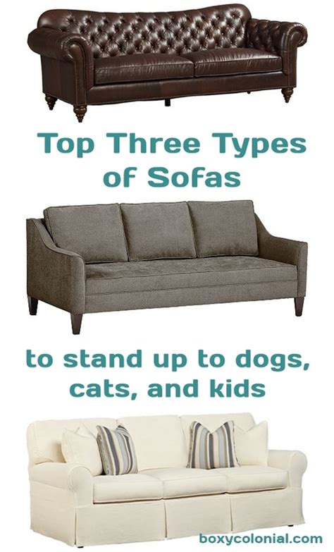 cats and leather sofas how to have a pretty sofa while also having dogs cats