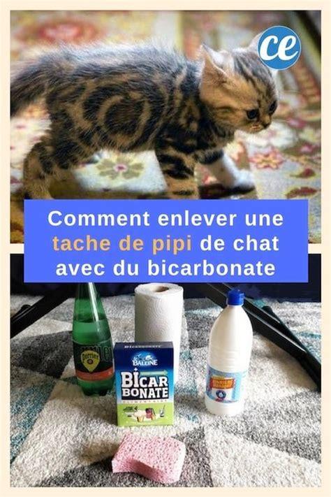 Nettoyer Urine Sur Tapis by Urine De Chat Sur Tapis Id 233 Es D 233 Coration Id 233 Es D 233 Coration