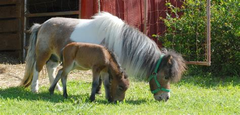 backyard breeder laws backyard breeders blamed for spike in equine population