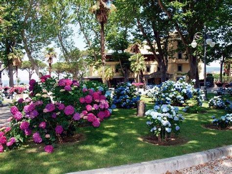 fiori per aiuole estive piante per aiuole piante da giardino scegliere le