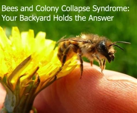 how to raise bees in your backyard save the bees 10 handpicked ideas to discover in science