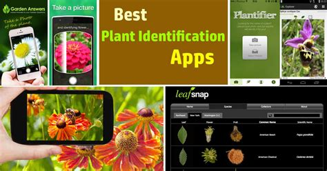 plant identification apps balcony garden web