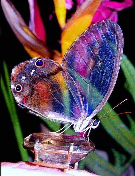 imagenes mariposas en movimiento im 225 genes de mariposas para descargar gratis con fotos de