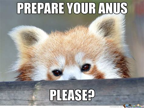Red Panda Meme - polite red panda by likeaboss meme center