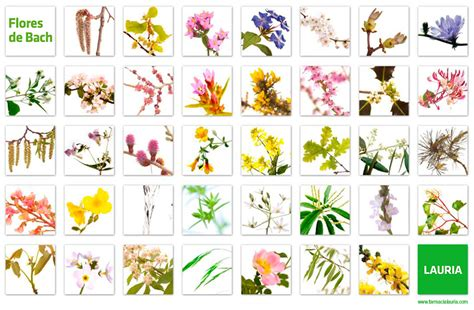 imagenes de flores de bach flores de bach farmacia lauria