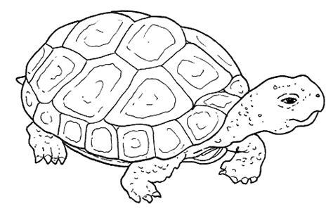 animali da cortile da colorare tartaruga realistica da colorare disegni da colorare