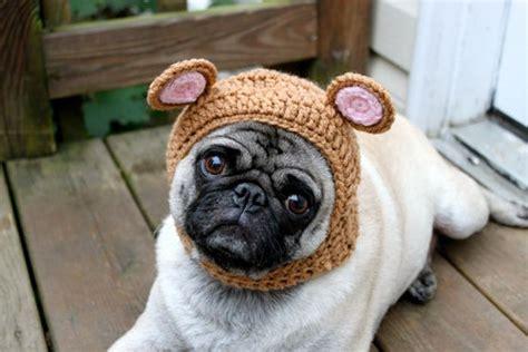 pug hats sweethoots pug hats 50 pics