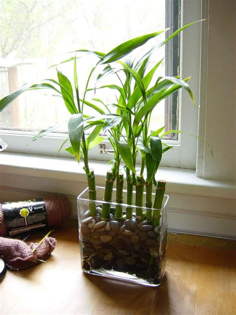 feng shui bamboo plant in bedroom feng shui the realtor s 174 way bestprintbuy real estate