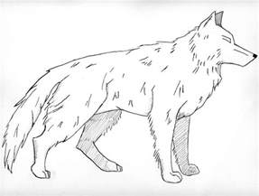 wolf coloring sheet free printable wolf coloring pages for