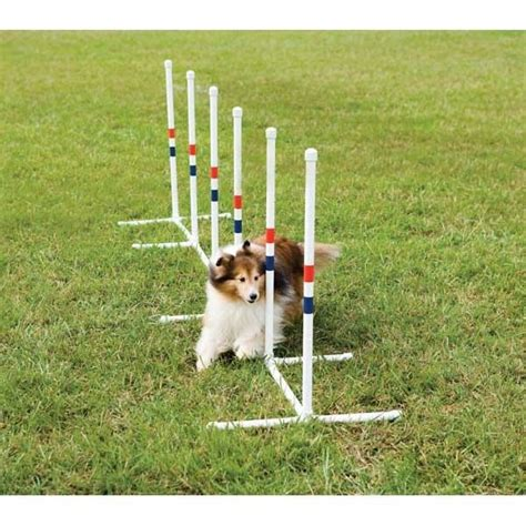 backyard obstacle course for dogs pinterest discover and save creative ideas