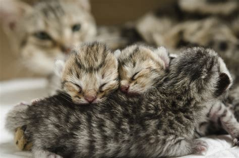 how to take care of a 4 week puppy how to take care of a 4 week kitten animals me