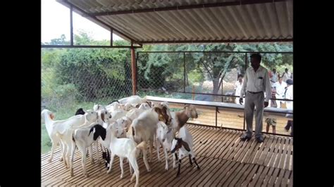 Low Budget House Plans by Broiler Sheep And Goat Shed India Youtube